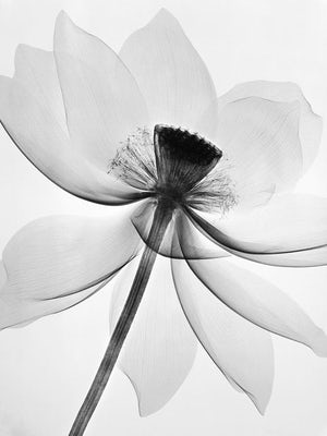 Flower via natural beauty Pinterest board