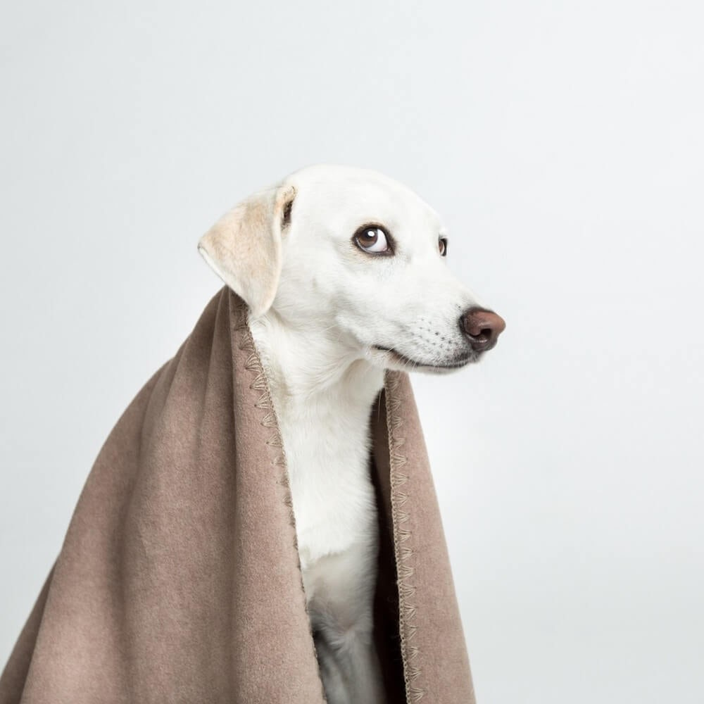 Soft Fleece Dog Blanket Context 4
